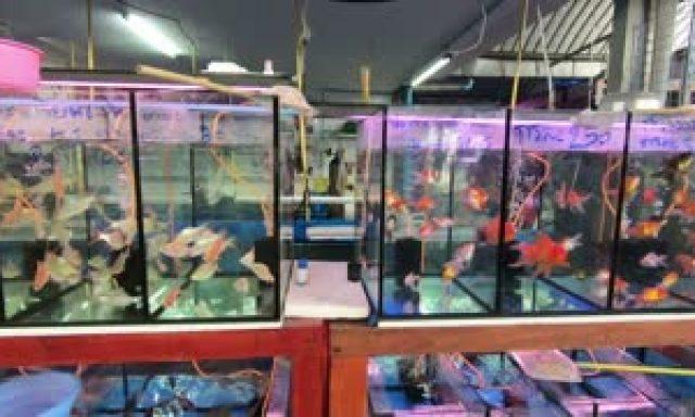 Cửa hàng cá cảnh